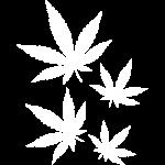 Weed - Marijuanna Leaf
