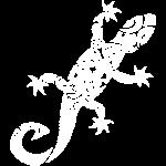 Maori Lizzard